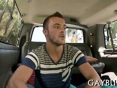Wild cock riding inside a car