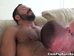 Bareback bear cockridden by tight horny cub